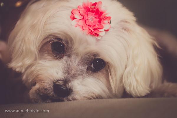 chien portrait